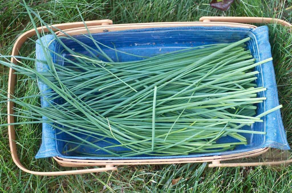 chives in a basket