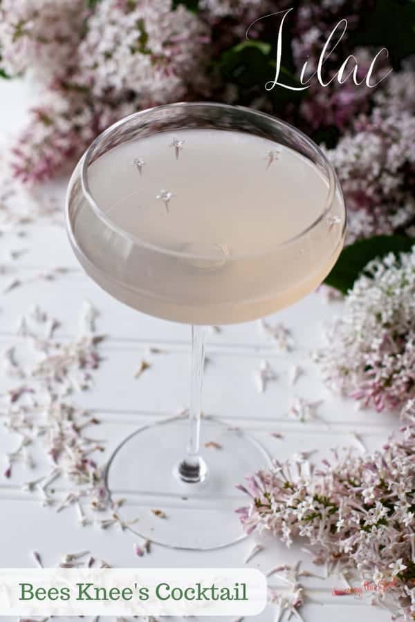 Enjoy this recipes for Lilac bee's knees cocktail at Mother's Day brunch, bridal showers or on cool spring evenings. The addition of fresh lilacs is a lovely addition to this Bee's knees cocktail recipe. #cocktail #cocktailrecipe #lilaccocktail #beesknees #beeskneescocktail #mothersday #bridalshower
