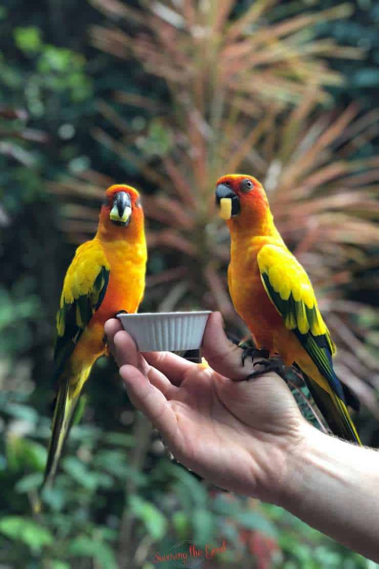 feeding the birds at the aviary at Discovery cove.