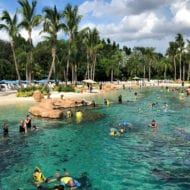 The Ultimate Guide To Discovery Cove Orlando