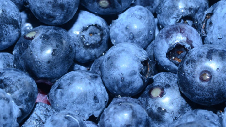 fresh blueberries square image