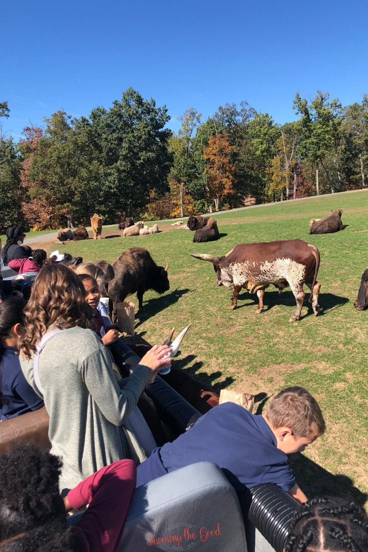 feeding the animals on safari at Lake Tobias Wildlife Park