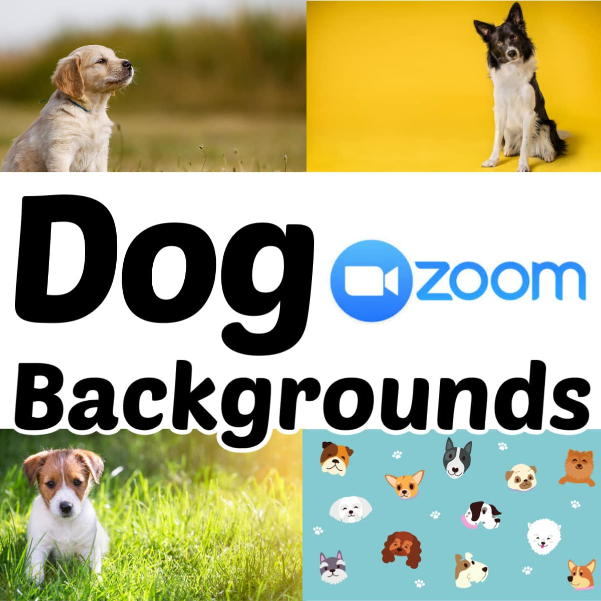 Dog Zoom virtual backgrounds