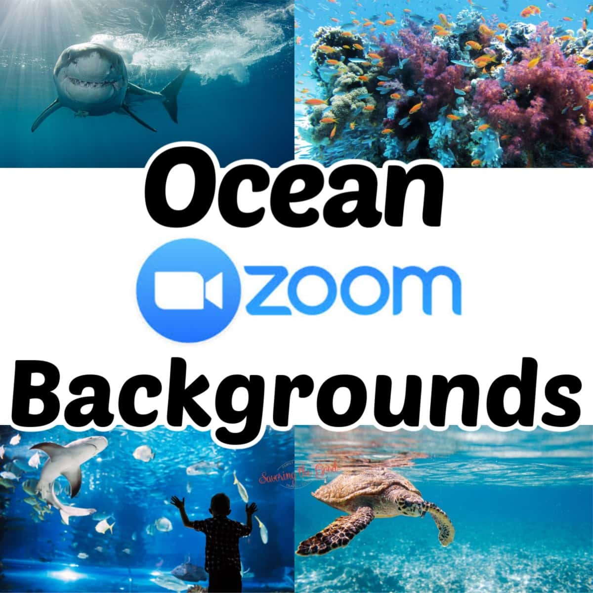 Ocean Themed Zoom Backgrounds graphic