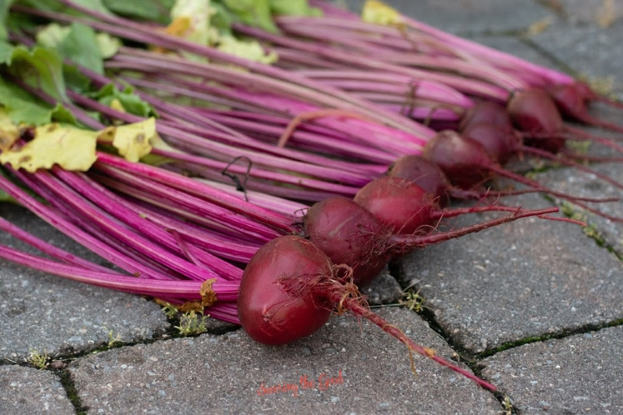 fresh beets in a row