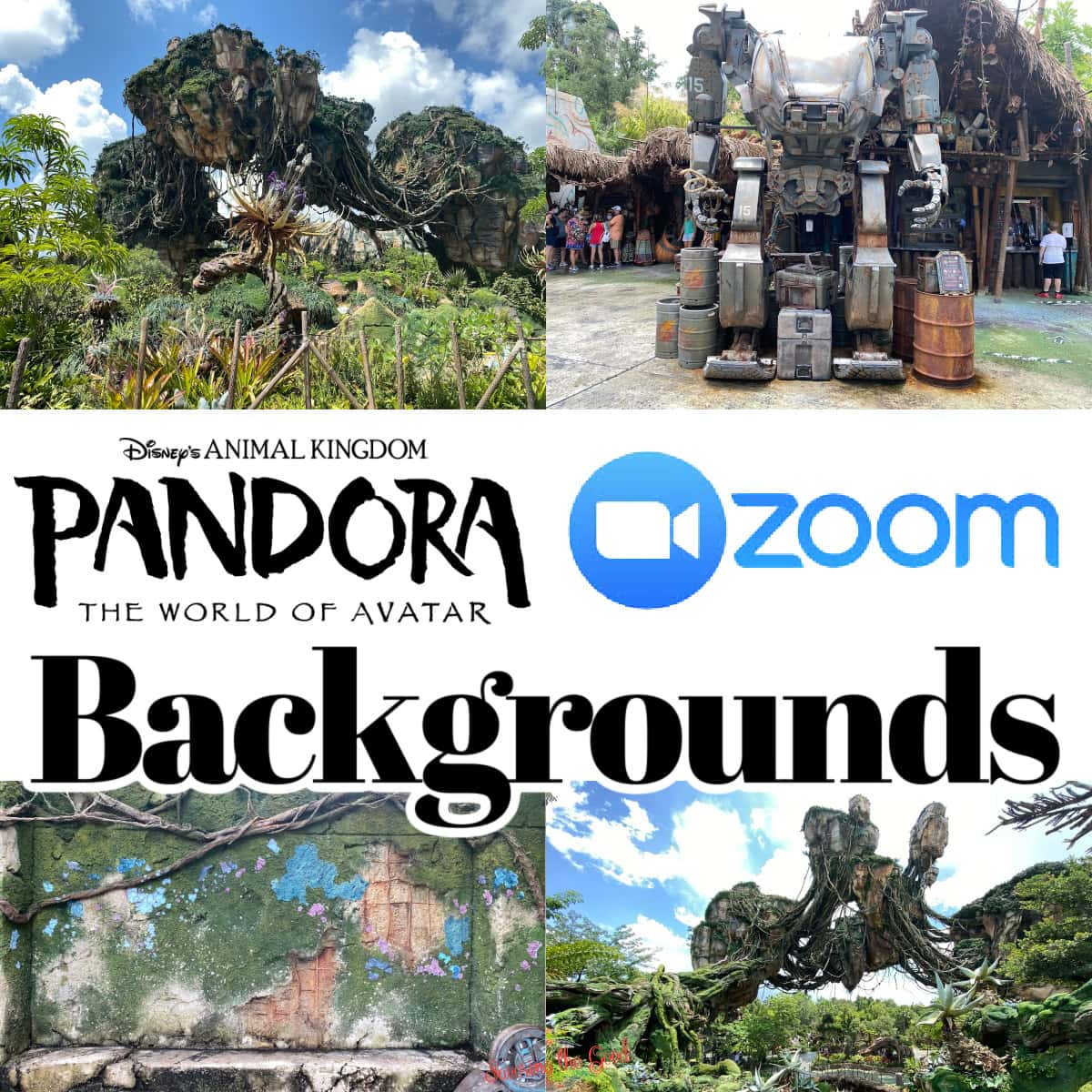 Free Pandora: The World of Avatar Backgrounds For Zoom graphic