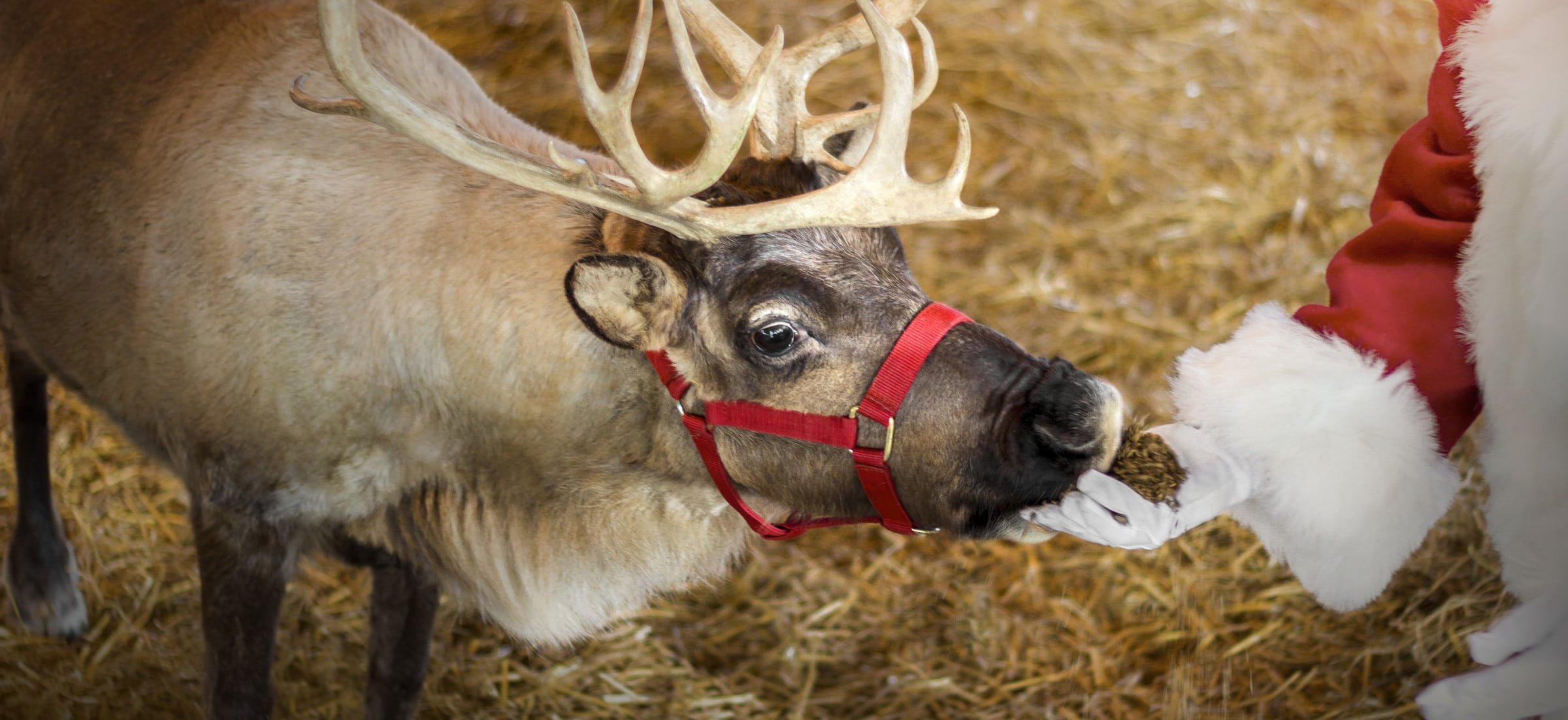 Christmas Candylane - Santa and Reindeer
