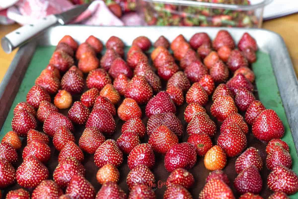 fresh strawberries in rows, to be frozen on a sheet tray